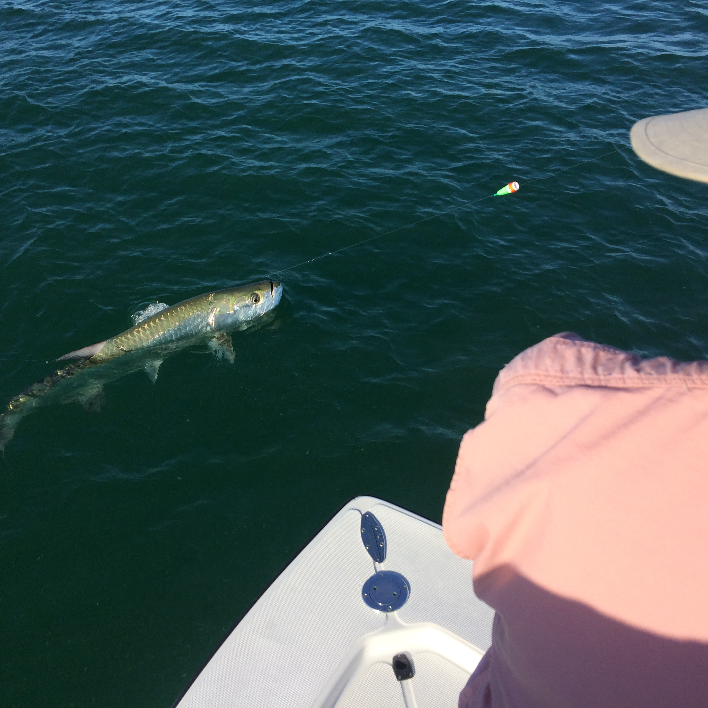 Fishing report may 29 2015 naples fishing marco island for Fishing charters naples fl
