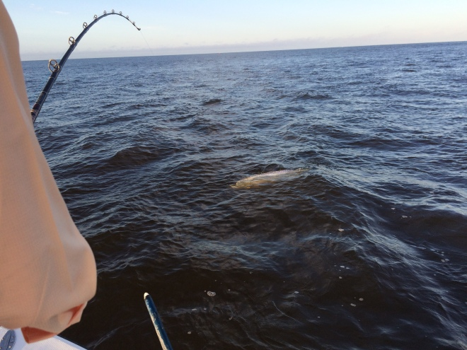Fishing Reports Naples Fishing Charters Marco Island